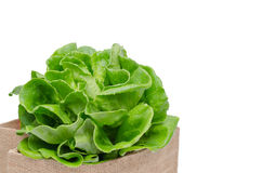 Fresh green vegetables Royalty Free Stock Photo