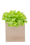Fresh green vegetables Stock Photos