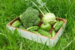 Fresh green vegetables in the wooden box on the grass royalty free stock images