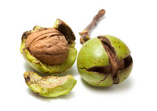 Fresh green walnuts with cracked peel Stock Photos