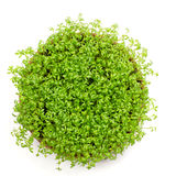 Fresh green watercress isolated Stock Photos