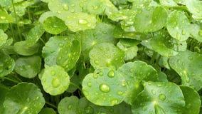 Fresh green Royalty Free Stock Photos