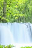 Fresh green and waterfall Stock Photography
