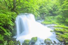 Fresh green and waterfall Royalty Free Stock Photo