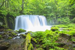 Fresh green and waterfall Royalty Free Stock Photography