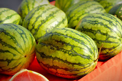 Fresh green watermelons Stock Photography