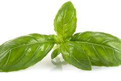 Fresh green wet leaf basil. Isolated on a white background Stock Photography