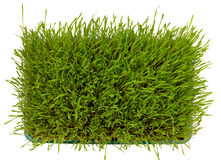Fresh green wheatgrass Royalty Free Stock Images