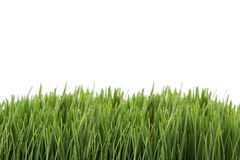 Fresh green wheatgrass isolated on white Stock Photography