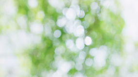 Fresh Green White Glistening Nature Bokeh Background stock video footage