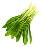Fresh Green Wild  Leek. Studio Photo Royalty Free Stock Images