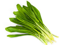 Fresh Green Wild  Leek. Studio Photo Royalty Free Stock Photography