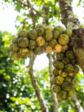 Fresh green wollongong. Stock Images