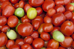 Fresh green, yellow, and red tomatoes in market Royalty Free Stock Image