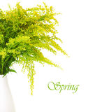 Fresh green yellow spring flowers Stock Image