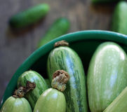 Fresh green zucchini Stock Images