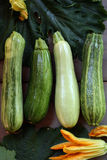 Fresh green zucchini Royalty Free Stock Image