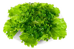Fresh greenery on white plate. Royalty Free Stock Photo