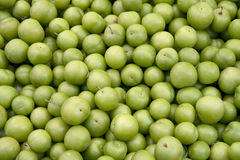 Fresh greengages Royalty Free Stock Photo