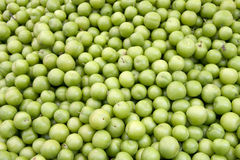 Fresh greengages Royalty Free Stock Photography