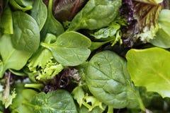 Fresh greens Stock Image