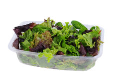 Fresh Greens in Plastic Tub Royalty Free Stock Photos