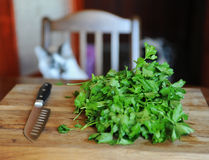 Fresh greens on a wooden cutting board, knife with a black handle. White cat cook on the background. Fresh greens on a wooden cutting board, knife with black Stock Image