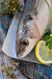 Fresh grey mullet Royalty Free Stock Images