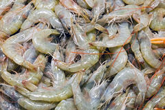Fresh grey prawns for sale Royalty Free Stock Image