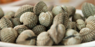 Fresh grilled cockle shells Stock Image