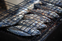 Fresh grilled fishes Stock Image