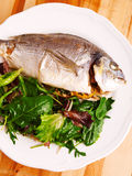 Fresh grilled Gilt-head bream Stock Photography