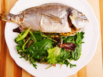 Fresh grilled Gilt-head bream Stock Images