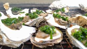 Fresh Grilled Oyster on a Barbecue Grill stock photo