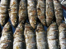 Fresh grilled  sardines Royalty Free Stock Image