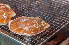 Fresh grilled scallops Stock Images