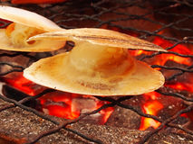 Grilled scallop. Fresh grilled scallops on stove Royalty Free Stock Photo