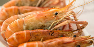 Fresh grilled shrimps on white plate Stock Photography