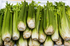 Fresh group of Celery. Stock Photography