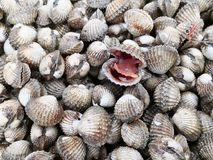 Raw seafood series. Fresh group of Cockles in market for sale Stock Image