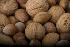Fresh group of nuts Stock Photos