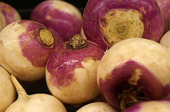 Fresh Group of Turnips royalty free stock photo