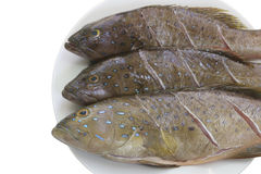 Fresh grouper fish (Leopard grouper) on dish for the ingredient Stock Photos