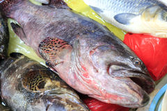 Fresh Grouper fish. In the market Stock Images