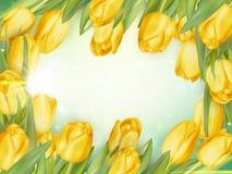 Fresh growing tulips. EPS 10 Stock Photo