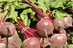 Fresh Grown Beets Royalty Free Stock Photography