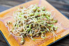 Fresh grown pea sprouts on a plate Stock Photo
