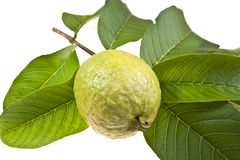 Fresh Guava Fruit Royalty Free Stock Photos