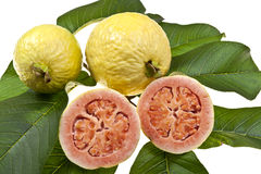 Fresh Guava Fruit Royalty Free Stock Photo