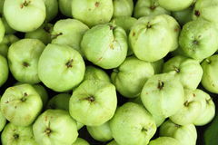 Fresh Guava Fruits. At The Market Stall Stock Images